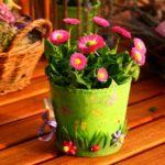 Zimmerpflanzen für mehr Behaglichkeit