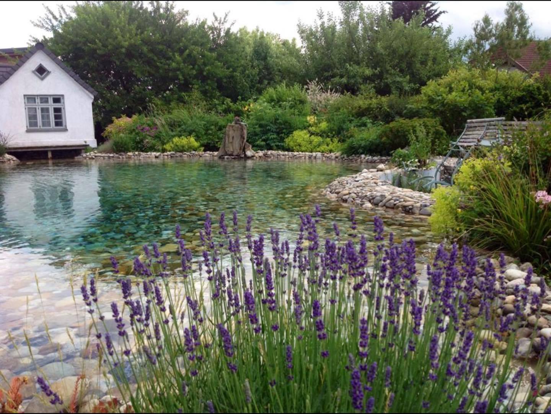 Selbst angelegter Schwimmteich mit Betonboden